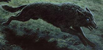 Cães e Lobos - Draugluin (Lobo de Sauron)